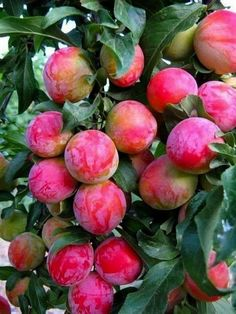 Pin on Flowers/fruits – Color in Nature: Fruits and Vegetables – Obst