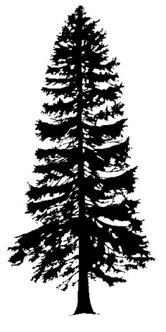 Cedar Tree Silhouette - Cliparts.co More