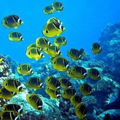 coral reef adventures