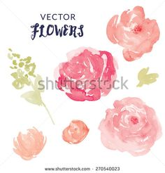 Watercolor Flower Vector With Blooms and Leaves. Pink Vector Watercolor Peonies and Watercolor Leaves