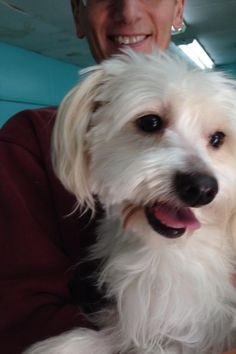 Skye King Terrier & Pomeranian Mix • Adult • Male • Small ...
