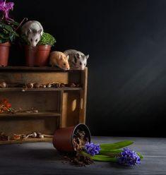 La mignonne Invasion des Hamsters de Elena Eremina (22)