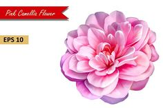 Pink Rose Camellia Flower. Vector - Objects