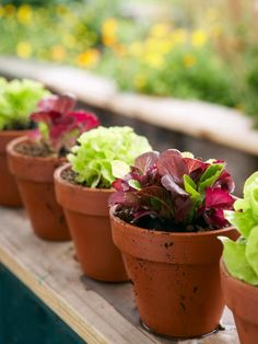 How to grow your own salad in containers >> http://www.hgtv.com/gardening/sow-a-bowl-of-salad-in-pots/index.html?soc=pinterest