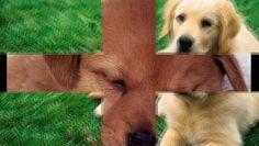 en ucuz köpek mamaları