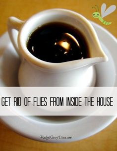 How to Get Rid of Flies in the House