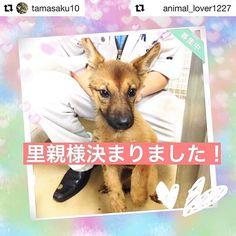 リポストします。 よかったね👏👏👏 #Repost @tamasaku10 with @repostapp ・・・ #Repost @animal_lover1227 with @repostapp ・・・ 里親様決まったそうです❣ ご協力いただいた皆様ありがとうございました🐶🐾💕 お手数をお掛けしまして申し訳ございませんが募集投稿の削除をお願いいたします! ・ ・ 📢緊急 拡散希望‼️ 里親様募集中です。山口県は命の期限が1週間です。この子の命の期限8/14です。  拡散していただけると繋がる命があります‼️ 拡散方法はTwitterやFacebookなどでも構いません!どうかよろしくお願いいたします😢#里親募集_山口 ・ ・ この子は「ペットのおうち」という里親募集サイトに掲載されています。 この子の家族になりたい!質問したい!という方は 私のプロフィール欄 【@animal_lover1227 】に「ペットのおうち」のリンクを貼っていますので 詳細条件にあるキーワードに 121325…