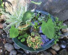 Making A Pond in a Pot #garden #pond Garden Stream, Indoor Water Garden, Garden Pond, Garden Fountains, Herb Garden, Indoor Pond, Small Fountains, Garden Plants, Diy Fountain