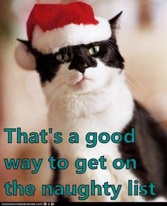 Kitty elf disapproves