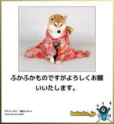 870枚以上!【動物系〝ボケて″の傑作集!】 ボケて(bokete) から個人的オキニを集めました - NAVER まとめ Animals And Pets, Funny Animals, New Year Postcard, New Year Card, Can't Stop Laughing, Illustrations And Posters, Funny Moments, Funny Pictures, Jokes