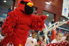 Coop the Cardinal