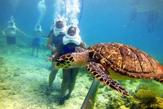 Sea trek in Cham island (Cu Lao Cham) nearby Hoi An #hoianattraction #danangattraction