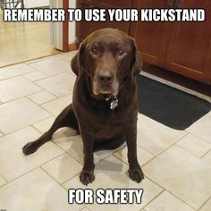 Nestle the Chocolate Lab demonstrating the use of the kickstand for safety.