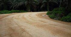 Jalan tanah di perkebunan kelapa sawit setelah dikeraskan oleh SoilIndo dengan ROTEC Soil Stabilizer.