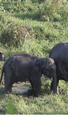 Baby Elephant Video, Elephant Gif, Elephant World, Elephant Nursery, Funny Animal Quotes, Animal Jokes, Funny Animal Videos, Cute Animal Photos, Animal Logo