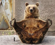 bear yoga: http://www.npr.org/2012/02/07/146463156/the-risks-and-rewards-of-practicing-yoga