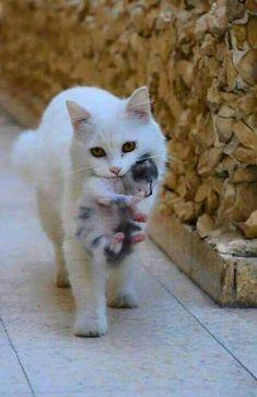 Sweet Precious Mum and Kitten.