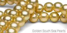 """Your Ultimate Guide to Pearl Colors: Golden Pearls! Golden South Sea pearls in the 14K Golden body color range are considered a """"medium-tone"""" gold, and are among the most common body colors available today. Shimmering with Neutral Gold or Rose overtones, these Golden pearls look great on the largest array of complexions."""