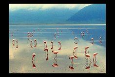 Lake Manyara - Arusha Tanzania