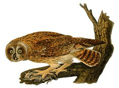 Vintage Graphic - Owl on Branch - The Graphics Fairy