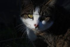 Black Pearl  on www.yummypets.com Cat, kitten, kitty, meow, purr, pets, animals, pussycat, tabby cat, Yummypets