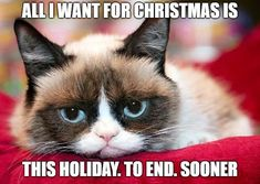 Handsome - Tap the link now to see all of our cool cat collections! Grumpy Cat Quotes, Grumpy Cat Humor, Funny Cat Memes, Funny Cats, Funny Animals, Grumpy Cats, Cat Jokes, Hilarious, Funny Cat Pictures