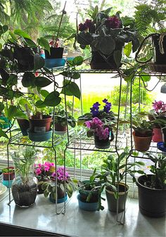 Plant stands, made with interlocking, locker shelves-DIY by janeizzy, via Flickr