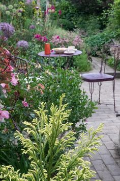 Successful small garden planting ideas for beautiful borders Small Garden Uk, Small Garden Borders, Very Small Garden Ideas, Garden Border Plants, Plants For Small Gardens, Small Garden Landscape Design, Small Garden Inspiration, Small Front Gardens, Table Rose