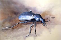 Martine Vanparijs   WATERCOLOR Watercolor Animals, Watercolour Painting, Watercolours, Cool Artwork, Amazing Artwork, Bug Art, Bugs And Insects, Arts Ed, Unique Art