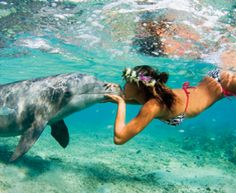 I want to be this girl... my all-time favorite animal. even over dogs ;)
