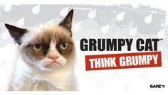 Grumpy Cat by Ganz - Grumpy Cat Merchandise Products