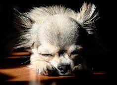 Napping in the smidgen of sunlight.