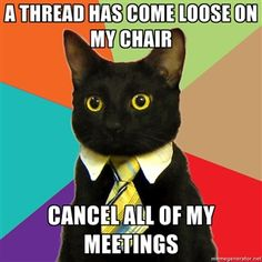 A Thread has come loose on my chair Cancel all of my meetings | Business Cat | Meme Generator