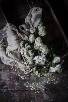 Easter: Crescia, Tiramisu and Rebirth. | Hortus Natural Cooking - Naturally Italian.