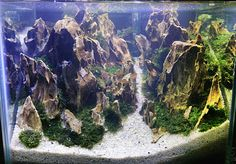 My scape