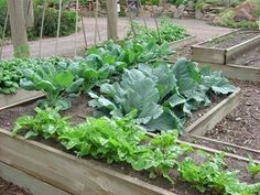 Good article on high altitude gardening in Colorado.