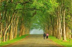 beautiful tree tunnel in Taiwan
