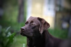 😉😊💓😎💝Follow us for more lovely, adorable Labradors videos and pictures#labrador #lab #labradorretriever #labradoodle #labs #labradors #labradorite #labradoroftheday #labradorable #laboftheday #lablove #labpuppy #labradorpuppy #labradors_ #labradorlove #labrador_class #labrador_feature #labradorchocolate #labrador_lovers #labradorretrievers