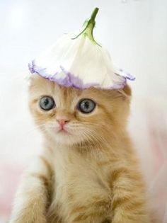 チューリップハット : おもしろかわいい子猫画像集 - NAVER まとめ