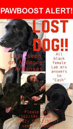 Please spread the word! Cash was last seen in Bellflower, CA 90706.    Nearest Address: Near Arkansas St & Ardmore Ave