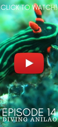 Episode 14: Macro Diving in Anilao, Philippines! Want to see the best macro diving in the world? Click the pin to watch the whole episode from scuba diving Anilao!