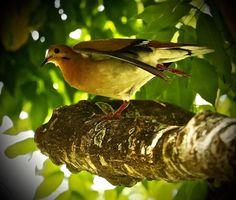 Photo Shot taken with Canon EOS 24 shares, 68 likes and 2074 views. Birds, Attila, Bird