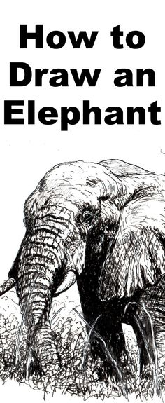 Learn to draw an elephant with this pen and ink drawing lesson