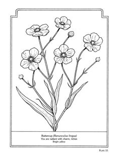 Coloring Pages Plants 124