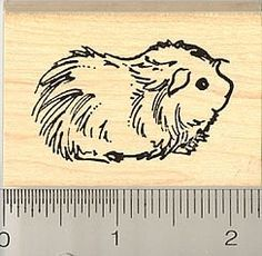 Cute Long haired Guinea Pig Rubber Stamp by RubberHedgehog, http://www.amazon.com/dp/B0018VHASU/ref=cm_sw_r_pi_dp_vAkHqb0HTF67D