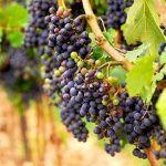 Rv, Pergola, Fruit, Gardening, Motorhome, Outdoor Pergola, Lawn And Garden, Camper, Horticulture