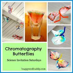 chromatography butterflies header
