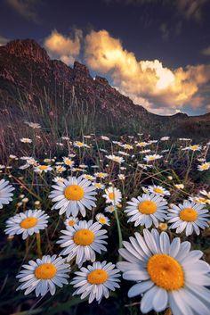 Al pie de la montaña by Manu Bermúdez on 500px Foto Nature, All Nature, Flowers Nature, Amazing Nature, Beautiful Flowers, Nature Photography Tips, Ocean Photography, Amazing Photography, Daisy