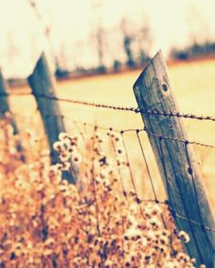 Country life - I want this as a pic to hang in my living room. I remember a fence like this that I use to sit on the porch and drink tea looking at. Country Charm, Country Style, Country Music, Country Lyrics, Country Quotes, Country Fences, Country Roads, Country Girls, Country Living