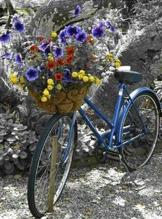 Bright & Cheery Flower Basket on Bicycle summer flowers bike bright colors basket petunias bold